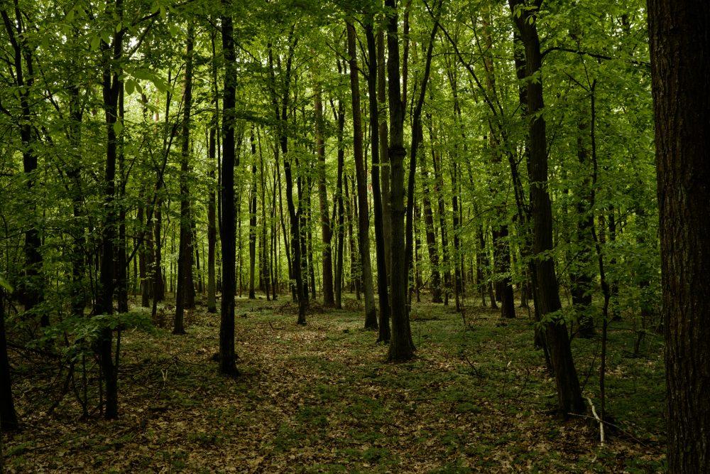 Leśne spacery - Dzikość serca - MyLittleAntS